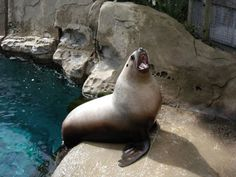 Endangered Water Animals Water Animals, Cute, Kawaii
