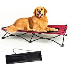20 Camping With Dogs Tips and Ideas - Best Dog Camping Gear Large Dog Breeds, Large Dogs, Fold Out Chair, Elevated Dog Bed, Dog Cots, Cool Dog Beds, Sleeping Dogs, Love Pet, Animals For Kids