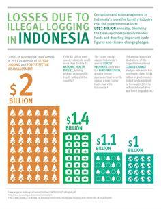 Illegal Logging in #Indonesia  #FlipOver