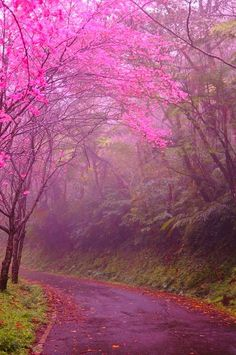 Cherry Blossom Lane, Kyoto, Japan photo via myrtle by lllllol Beautiful World, Beautiful Places, Beautiful Pictures, Simply Beautiful, Japan Photo, Belle Photo, Beautiful Landscapes, Wonders Of The World, Paths