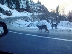 A retired National Park Service employee snapped a photo of a rare sighting of two lynx in southwest Colorado last weekend and the picture has gone viral.