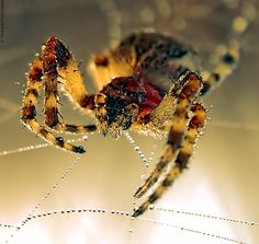 Spider by Panagiotis kyparissiou