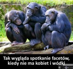 Beka z Człowieka - Strona 5 z 98 - Funny Pictures Can't Stop Laughing, Scary, Lol, Fantasy, Memes, Animals, Quotes, Humor, Quotations