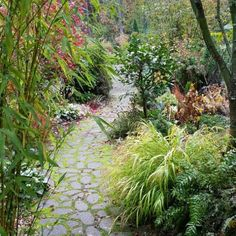 A Beautiful Cold and Wet November Garden
