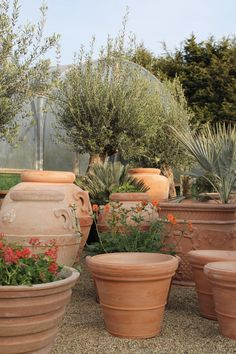 Vaso Toscano Italian terracotta pots and planters— Vaso Toscano Tuscan Vase Italia Begonia, Small Gardens, Outdoor Gardens, Potted Plants Patio, Country Cottage Garden, Mediterranean Plants, Italian Garden, Backyard Garden Design, Ornamental Grasses