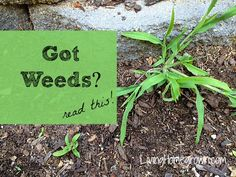 Very easy way to control weeds - using recycled cardboard. LivingHomegrown.com