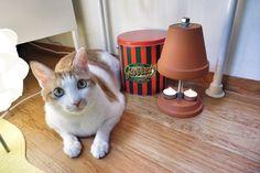 한빛군 Terracotta Tea Light Stand heater