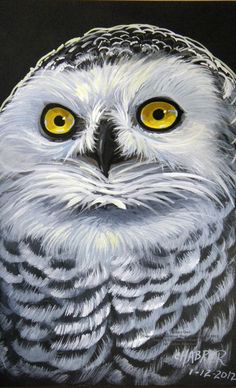 Snowy Owl by HouseofChabrier on DeviantArt Owl Bird, Pet Birds, Owl Rocks, Owl Illustration, Barred Owl, Beautiful Owl, Snowy Owl, Birds Of Prey, Colorful Birds