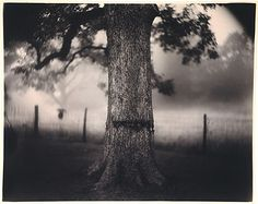 Sally Mann, Scarred Tree, from series Deep South, 1996
