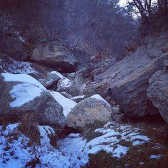 #Hiking with my #vizslas in #Colorado