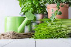 6 unusual herbs to grow in your spring garden