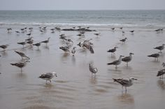gulls // Praia de Matosinhos