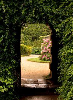 Tuinposter: Doorkijk geheel omzoomd door het groen van klimplanten - Teun's Tuinposters