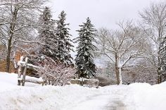 Unviersity of Waterloo , Ontario Waterloo Ontario, University, Nature, Outdoor, Outdoors, Naturaleza, Outdoor Games, Nature Illustration, The Great Outdoors