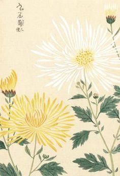 Honzo Zufu [Yellow & White Chrysanths] botanical print by Kan'en Iwasaki