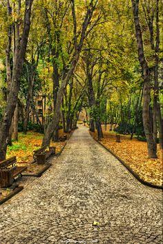 Autumn Leaves, Istanbul, Turkey.