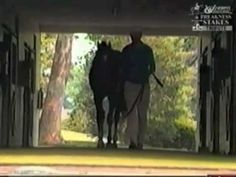 """I watched this whole thing and cried. """"and in that moment, he was more than life allows""""  ESPN Sports Century - Secretariat  Video: 40 min of appreciation. Pat Lynch, NY Racing Assn: """"The way God intended to make a horse."""""""