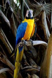 Resultado de imagem para pantanal fauna