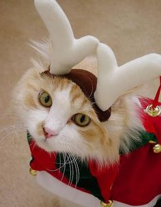 images of animals for Christmas | Funny pictures of animals.
