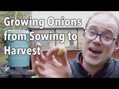 Growing Onions from Sowing to Harvest Texas Gardening, Organic Gardening, Gardening Tips, Gardening Gloves, Starting A Vegetable Garden, Home Vegetable Garden, Growing Onions, Growing Vegetables, Harvest Onions
