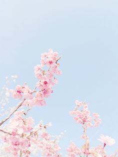 Afbeelding via We Heart It https://weheartit.com/entry/166499414/via/32289496 #beautiful #flowers #pink #sky