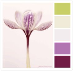 Super Swoon: Style & Inspiration from Paper Dahlia: Color Inspiration 13