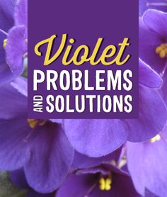Common African Violet Problems - Infinity Lawn & Garden
