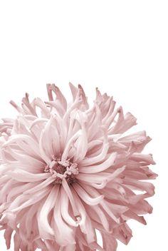 51 Most Popular Wall Paper Art Deco Iphone Rose Wallpaper, Cute Wallpaper Backgrounds, Art Deco Print, Wall Art Prints, Art Deco Wedding, Inspiration Wall, Art Plastique, Pink Aesthetic, Botanical Prints