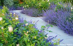 Garden Design Path Surrey