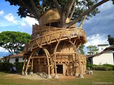 Bamboo Treehouse in Colombia — Guadua Bamboo