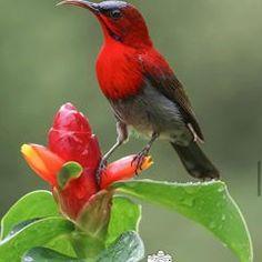 @birds.nature • Instagram photos and videos Pretty Birds, Beautiful Birds, Life Is Beautiful, Ailee, Birds 2, Wild Birds, Freedom Bird, Bird Sketch, African Grey Parrot