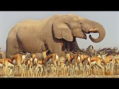 Wild Tanzania discovery Animals channel - National Geographic documentary - Animal planet HD. Wild Kalahari