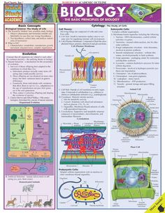 Basic Principles of Biology Quick Review. http://www.Examville.com