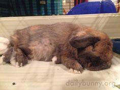Bunny is fast asleep - January 11, 2015