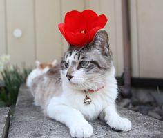 I am flower