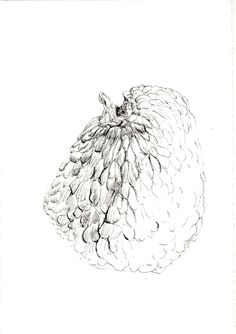 244 Seed Bank, Drawings, Sketches, Drawing, Portrait, Draw, Grimm, Illustrations