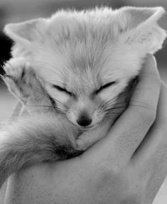 Baby Foxes might be the cutest things ever