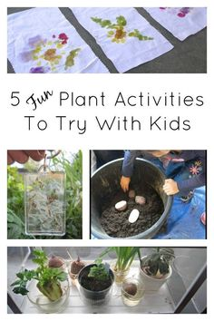 Fun plant activities to try with kids. Great science activities, art ideas, and more.