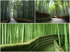 Arashyama Bamboo Garden