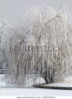 Park Winter Landscape Frozen White Fairy Stock Photo (Edit Now) 1582479913 Winter Landscape, Photo Editing, Royalty Free Stock Photos, Frozen, Fairy, Snow, Illustration, Photography, Outdoor