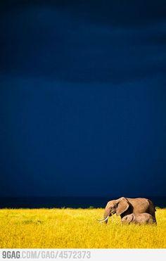 Blue, Yellow, Elephants.