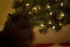 Кошки против (и за) новогодних ёлок