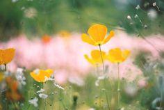 flores de bonita