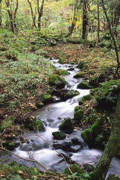 Google Image Result for http://www.johnharveyphoto.com/Japan2/Nikko/StreamByFallsHg.jpg