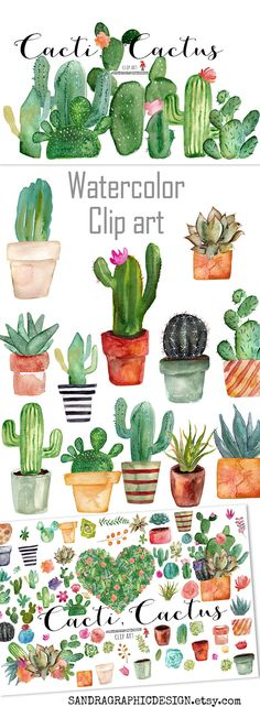 Beautiful cactus clip art. Hand painted with watercolor. #clipart #cactus #watercolor #handpainted #etsy #creativemarket