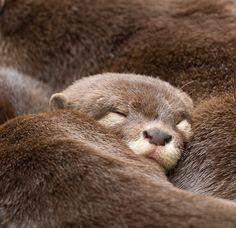 I otter take a nap~<3~