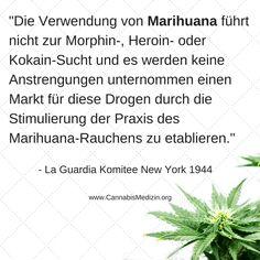 Seit dem Bericht des La Guardia Komitee war schon klar, dass Cannabis keine Einstiegsdroge ist, doch trotzdem hat sich diese Lüge bis heute gehalten.