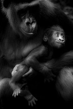 ☾ Midnight Dreams ☽ dreamy dramatic black and white photography - apes