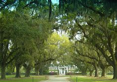 Boone Hall Plantation, South Carolina.  This is one of my favorite places I have been because it is humid, warm, and beautiful.  It is also full of history and The Notebook was filmed here :)