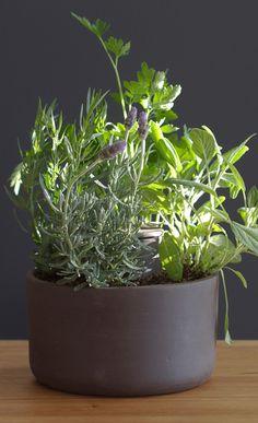 Joey Roth| Planter
